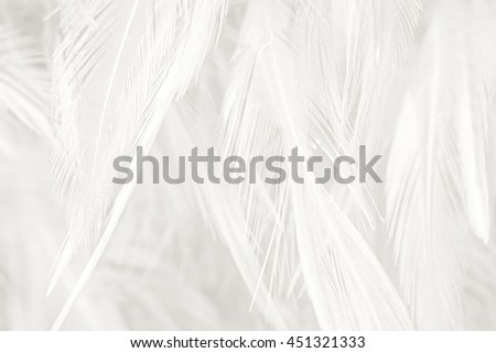 Black and white vintage color trends feather texture background #451321333