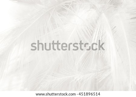 Black and white vintage color trends feather texture background #451896514