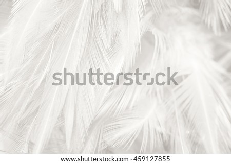 Black and white vintage color trends feather texture background #459127855
