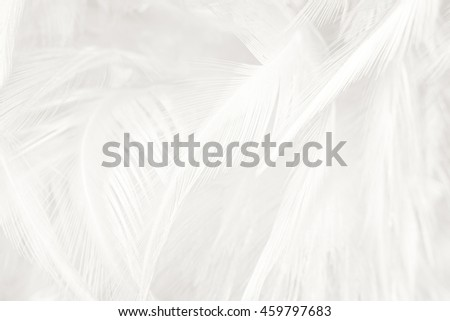 Black and white vintage color trends feather texture background #459797683