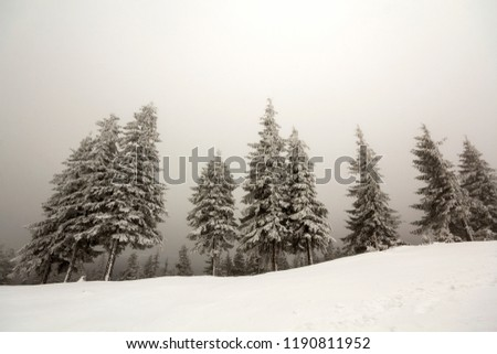 Black and white winter mountain landscape wide angle view. Row of dark fir-trees covered with frost in deep clear snow on copy space background of gray white sky and blurred black forest on horizon.