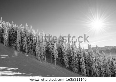 Black and white winter scenery  in Postavaru Massif Zdjęcia stock ©