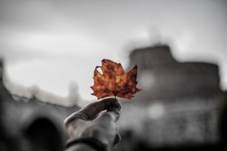 Black and white with orange color picture for background, one color photo. Photo for advartising or presintation. Black and white photo with beautiful blurred background. Leaf for background.