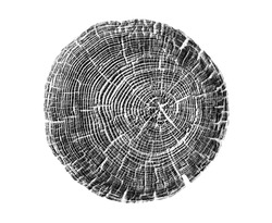 Black and white wood texture stamp art. Detailed tree ring design. Rough organic tree rings end grain.