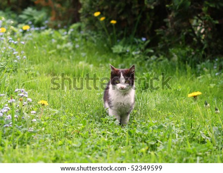Black and white young cat sitting in green grass in spring garden