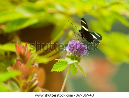 black and yellow Butterfly landing on a flower