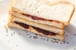 Black ants on a white breat sandwich