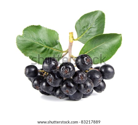 black ashberry isolated on white background