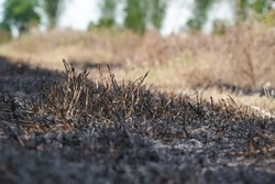 Black ashes from burning dry grass.