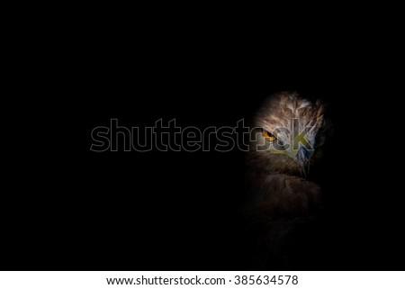black background and eagle eye\nBuzzard / Buteo buteo