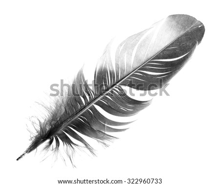 black bird feather isolated on white background #322960733