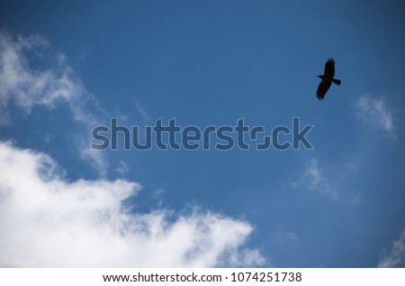 black bird in blue sky with white clouds #1074251738