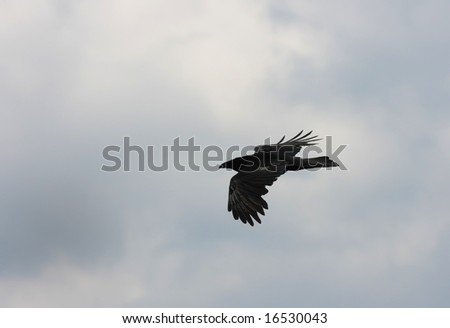 Black bird. Raven and sky. Cloud sky
