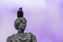 Black bird sitting on top of old sculpture. Raven. Purple background.