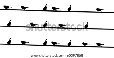 Black birds on electrical wires