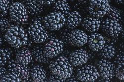 Black blackberry texture or background cg render