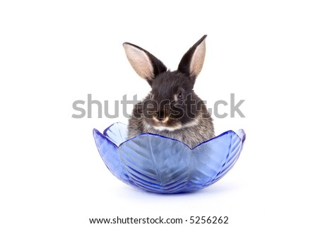 black bunny in a glass bowl
