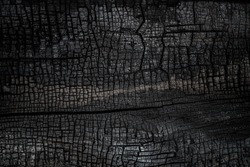 Black burned wooden board texture. Burnt wooden Board. Burned scratched hardwood surface. Halloween backdrop. Smoking wood plank halloween background.