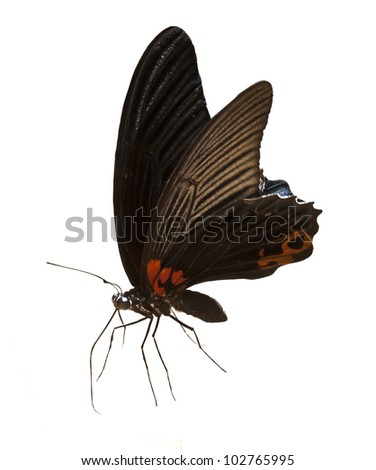 Black Butteflies isolated on white background