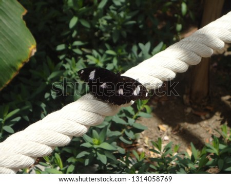 Black butterfly posed on a white rope. The typical example of a picture taked at the perfect moment.
