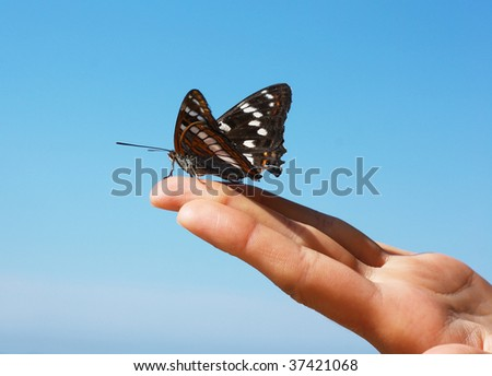 Black butterfly sitting on finger