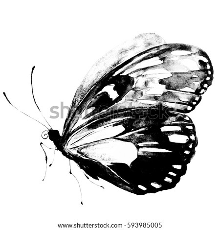 black butterfly,watercolor, isolated on a white