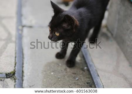 black cat #601563038