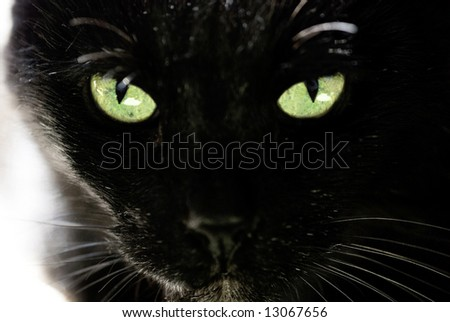 Black cat and beautiful eyes