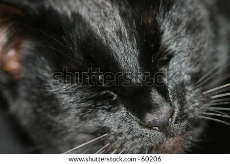 Black Cat Close up eyes closed