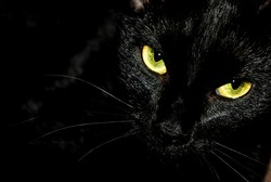Black cat creepy/sinister face/portrait on black background.
