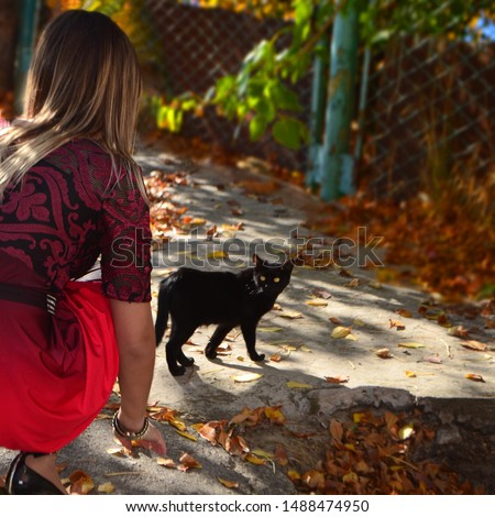 black cat crosses the road