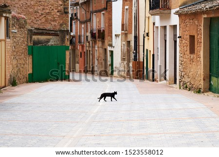 Black cat crossing the street. For the superstitious this is bad luck coming! Stockfoto ©