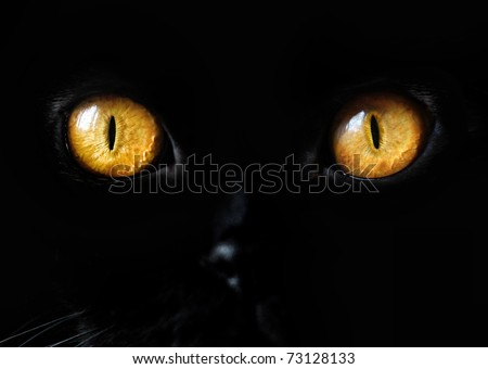 Stock Photo Black Cat Eye