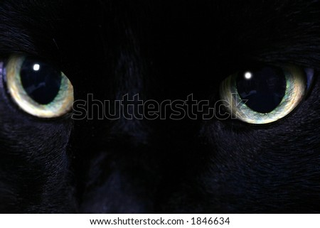 cat eyes foto. stock photo : Black cat eyes