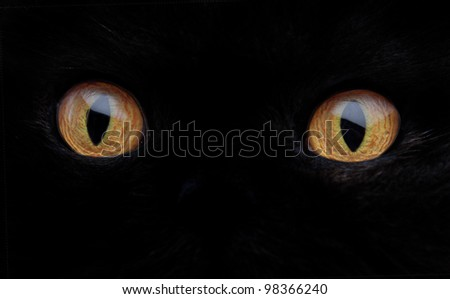 Stock Photo Black cat eyes