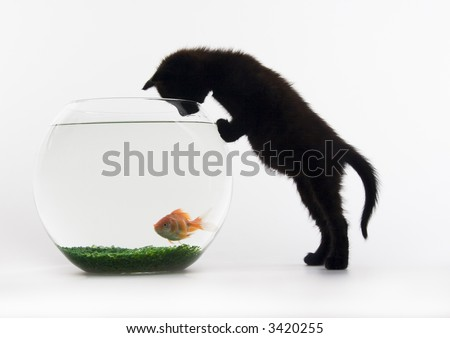 Black cat & Gold fish