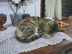 black cat gray stripes sleeping on the cupboard