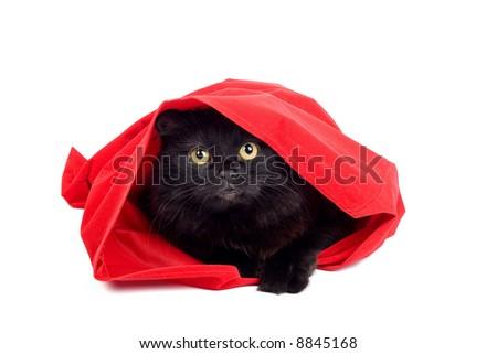black cat in a red bag