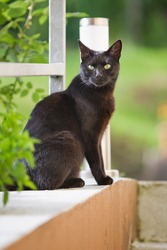 Black cat in a summer garden