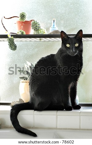 Black cat in bathroom window
