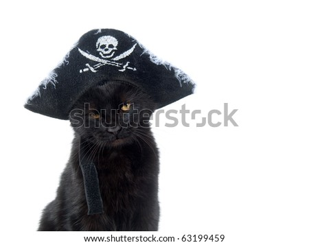 Black cat in pirate hat for halloween