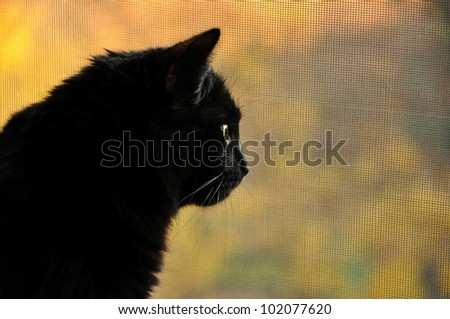Black cat in profile, looking at the street. close-up - stock photo
