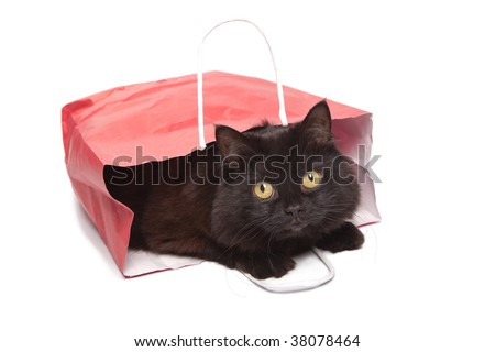 black cat in red bag isolated