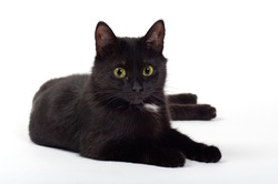 black cat in studio with white background