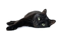 Black cat is lying on its side with its front paws stretched out and looking at the camera, isolated on a white background