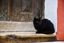 Black Cat is Sitting In Front Of An Old Wooden Door