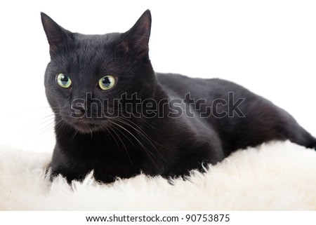 black cat isolated on the white background