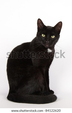 Black cat isolated on white background