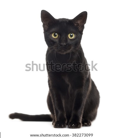 Black cat kitten looking at the camera, isolated on white
