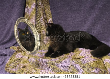 Black Cat Looks into Mirror at own reflected Image